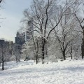Nueva York nevado
