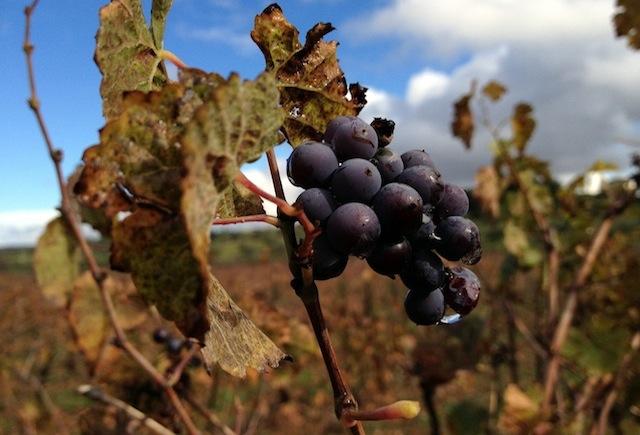 Vinos de Ronda: turismo enológico en la comarca