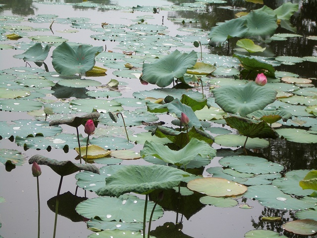 Vietnam Tumba Tu Duc Loleta 06