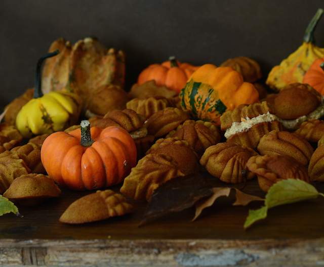 Bicocho calabaza otoño Loleta 4