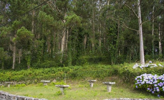 Los bosques de Galicia.