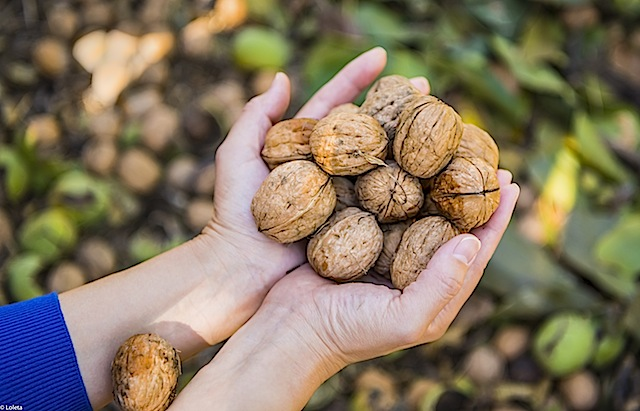 nuts-of-california-16