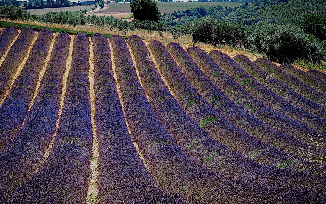 La Provenza I. Aix en Provence, Valensole, Manosque, Roussillon y Gordes